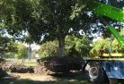 Barrow Creek Arborist 6